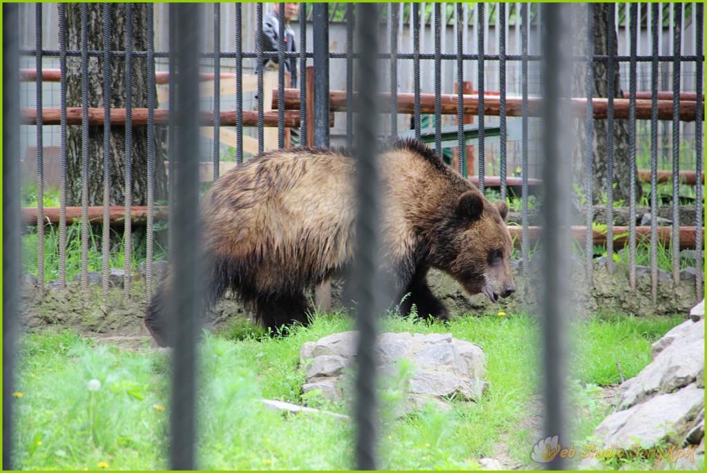бурый медведь, бурый медведь магазин, бурый медведь фото, бурый медведь компоненты, бурый медведь электронные, большой бурый медведь, бурый медведь области, бурый +и белый медведь, бурый медведь википедия, бурый медведь видео, тайга бурый медведь, бурый медведь тайги, сказки бурого медведя, сон медведь бурый, вес бурого медведя, кругом тайга +а бурые медведи, бурый медведь живет, про бурого медведя, бурый медведь новгородская область, бурый медведь весит, скорость бурого медведя, сколько живет бурый медведь, сколько весит бурый медведь, бурый медведь картинки, бурый медведь сайт, бурый медведь россия, самый большой бурый медведь, шкура бурого медведя, бурый медведь аляски, смотреть бурый медведь, жизни бурого медведя