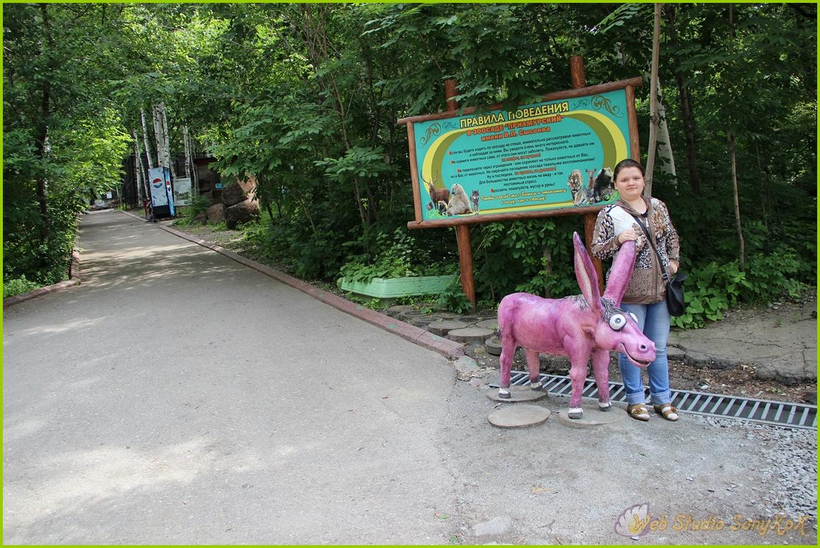 правила поведения, фото с осликом