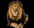 лев красивые фото, как нарисовать красивого льва, самый красивый лев, очень красивый лев