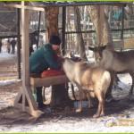 северный олень, северный олень сканворд, самка северного оленя, рога северного оленя, олень северной америки, северный олень 6 букв, самка северного оленя сканворд, панты северного оленя, северный олень кроссворд, важенка самка северного оленя, важенка самка северного оленя сканворд, олень северной америки кроссворд, дикий северный олень, северный олень фото, +так +вот +ты какой северный олень, охота +на северного оленя, видео северных оленей, северный олень 6 букв сканворд, северный олень песня, мясо северного оленя, теленок северного оленя, про северных оленей,