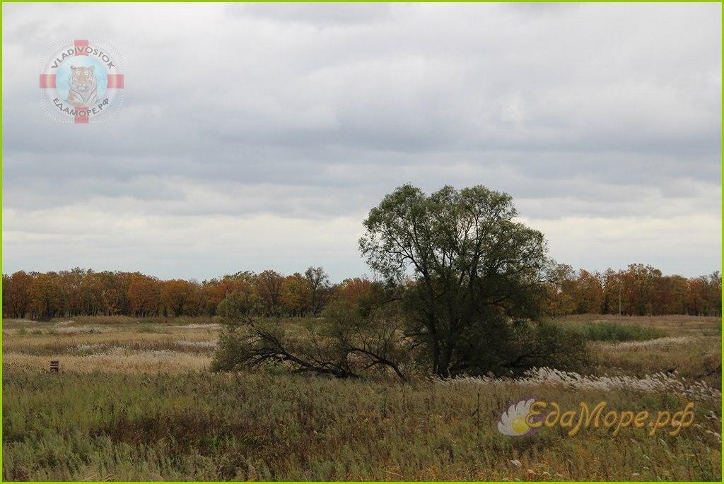 осенний лес, осенний лес картинки, осенний лес сочинение, тема осенний лес, фото осеннего леса, про осенний лес, красивый осенний лес, описание осеннего леса, краски осеннего леса, текст осенний лес, рассказ осенний лес, конспект осенний лес, осенняя фотосессия +в лесу, осенний лес рисунок, осенний день +в лесу, осенний русский лес, осенний лес какой, осенние цветы +в лесу, прогулка +по осеннему лесу, Осенний лес картинки от Cветланы SonykPk
