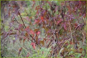 осенний лес, осенний лес картинки, осенний лес сочинение, тема осенний лес, фото осеннего леса, про осенний лес, красивый осенний лес, описание осеннего леса, краски осеннего леса, текст осенний лес, рассказ осенний лес, конспект осенний лес, осенняя фотосессия +в лесу, осенний лес рисунок, осенний день +в лесу, осенний русский лес, осенний лес какой, осенние цветы +в лесу, прогулка +по осеннему лесу
