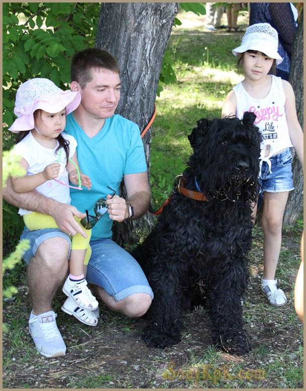 фото самых милых собак, милые породы собак фото, самые милые собаки в мире фото