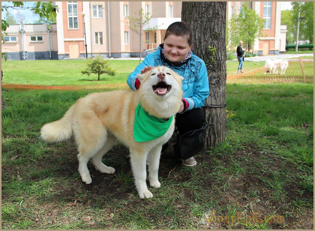 собаки помощники, собаки помощники человека