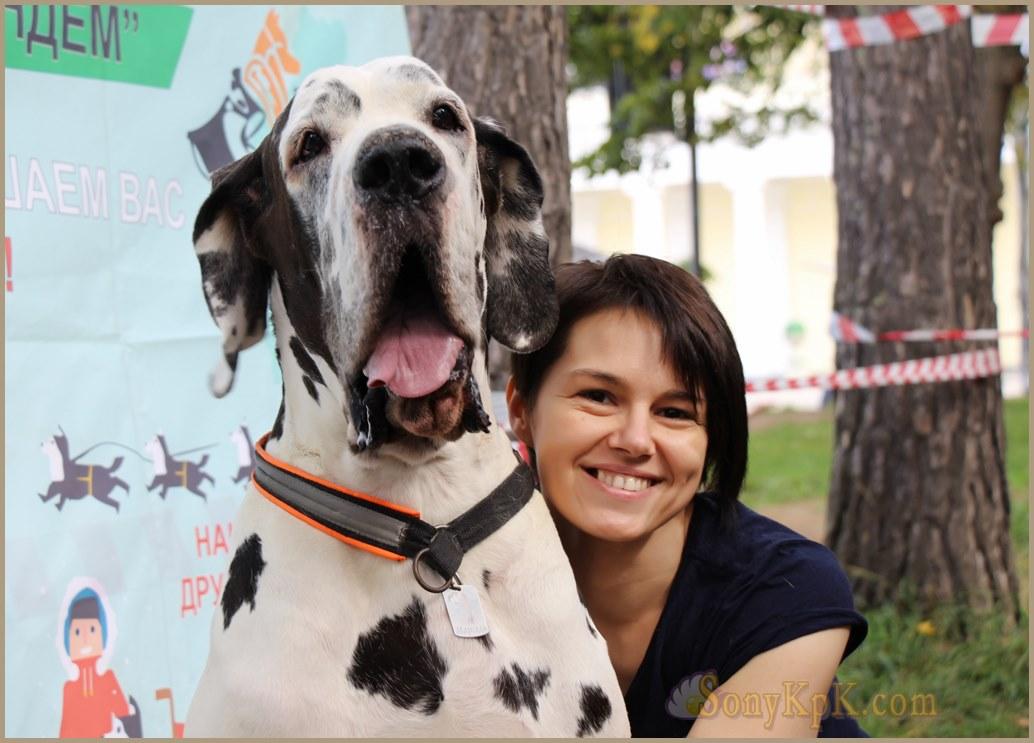 собака друг, человек собаке друг, с другом собакой