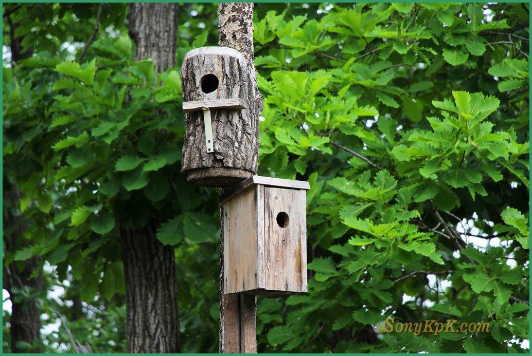 природа леса летом, фото леса летом, летом лес зеленый