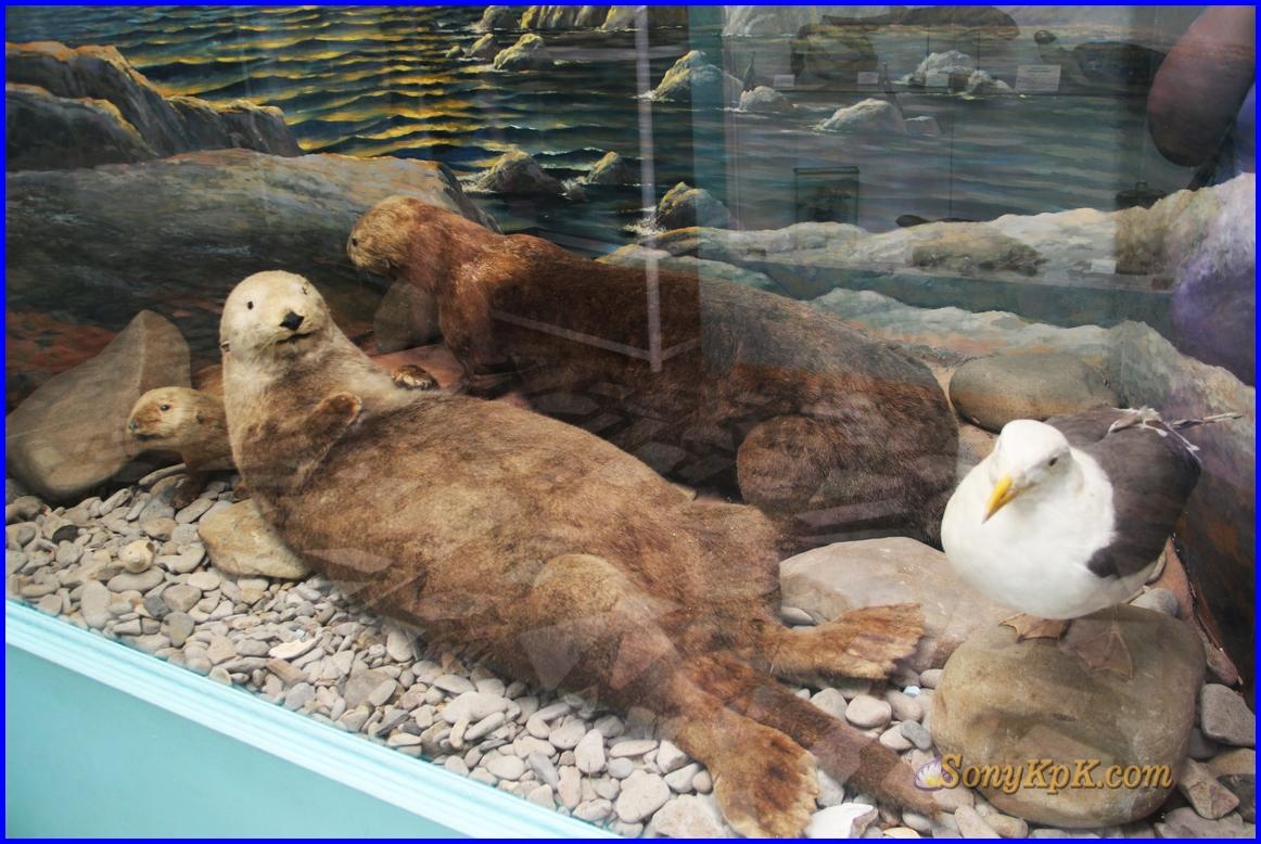 морские обитатели, морские обитатели для детей, про морских обитателей, морские обитатели картинки, морские обитатели моря