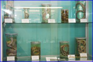 Океанариум, морской музей, музей, аквариум, Владивосток