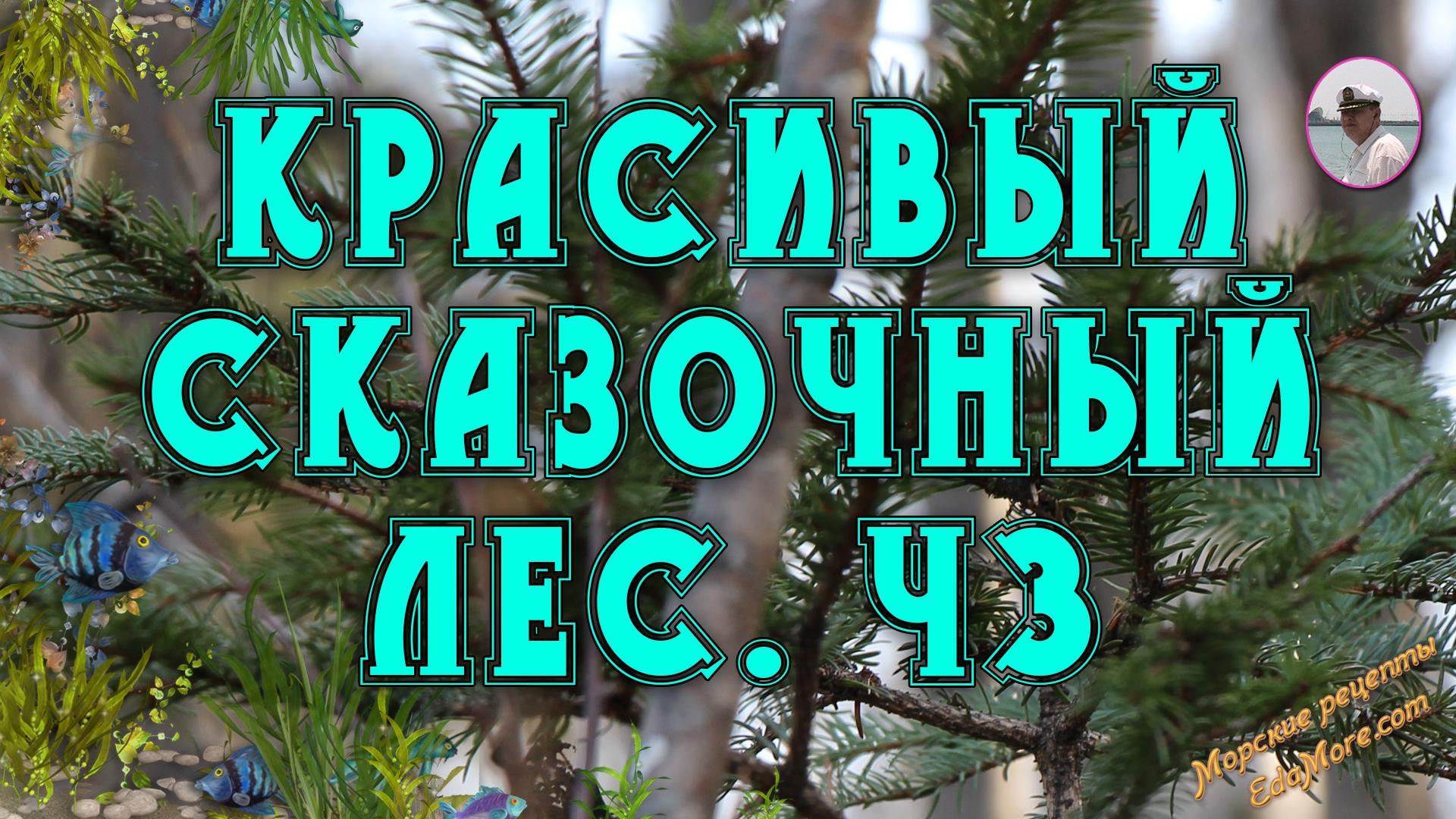 сказочный осенний лес, сказочный лес скачать, в сказочном лесу живут, песня сказочный лес