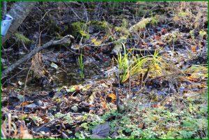 сказочный осенний лес, сказочный лес скачать, в сказочном лесу живут, песня сказочный лес, сказки сказочного леса