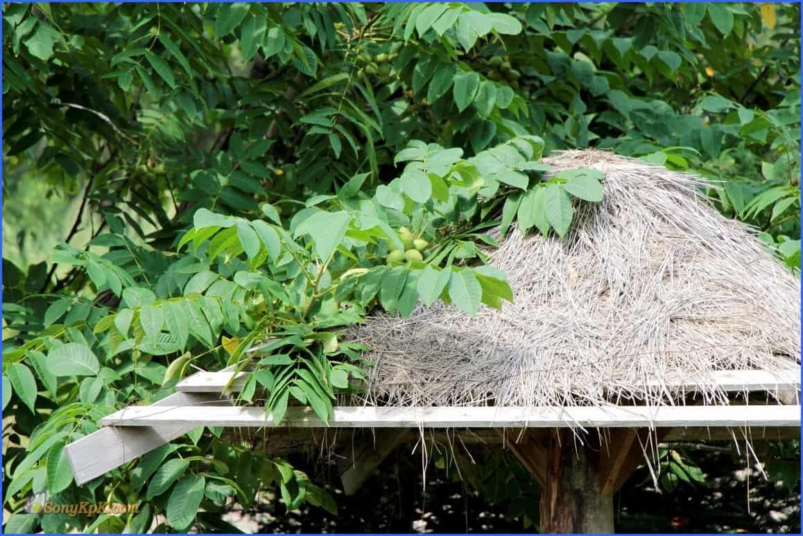 Рядом на крыше то ли орехи, то ли яйца мифической птицы Рух?